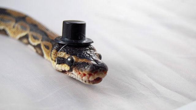 serpent-drole-chapeau-5