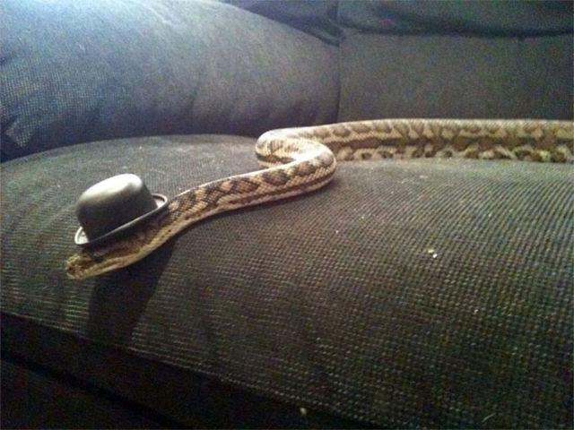 serpent-drole-chapeau-6