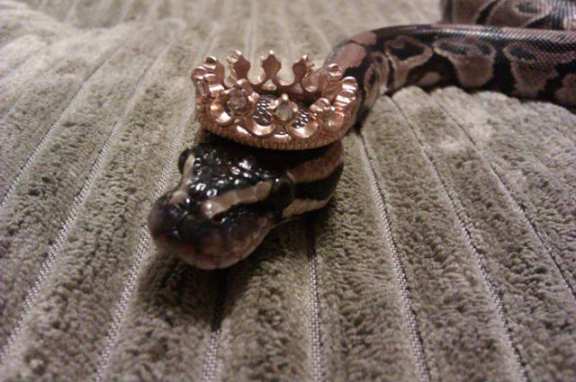 serpent-drole-chapeau-7