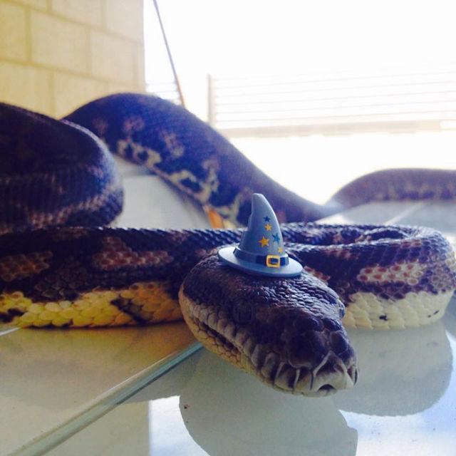 serpent-drole-chapeau-8