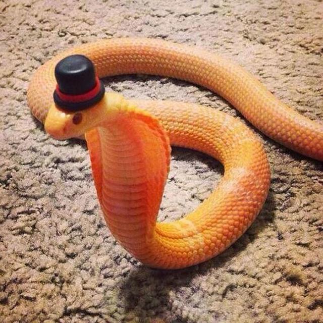 serpent-drole-chapeau-9