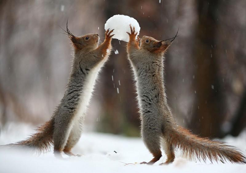écureuils insolites