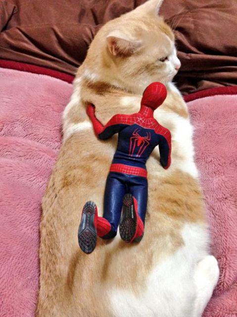spiderman et son chat1
