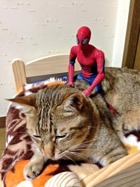 spiderman et son chat2