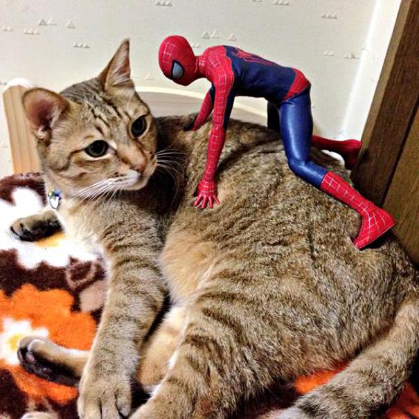 spiderman et son chat3