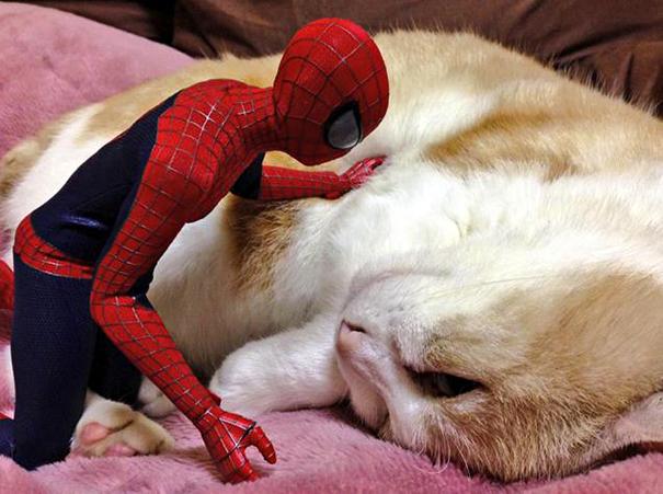 spiderman et son chat5