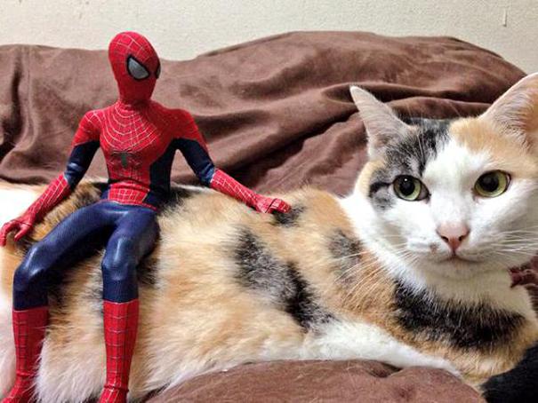 spiderman et son chat7