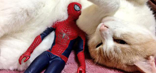 Spiderman et son chat 7