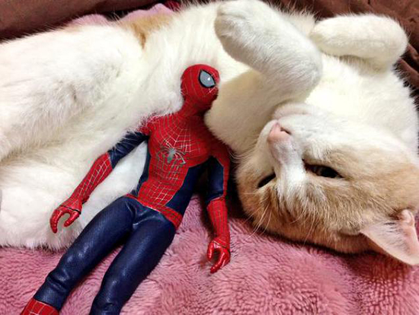 spiderman et son chat8