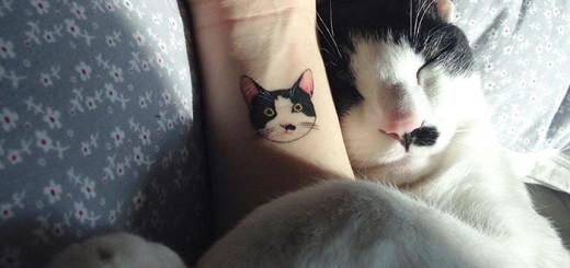 Véritable succès en Corée du Sud, ces mignons petits tatouages de chats sont pourtant interdits 1