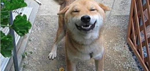 """Quand ce chien entend le mot """" CHEESE """" !"""