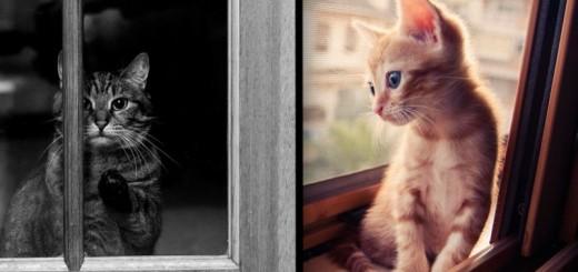 31 chats mélancoliques attendant le retour de leur maître 31