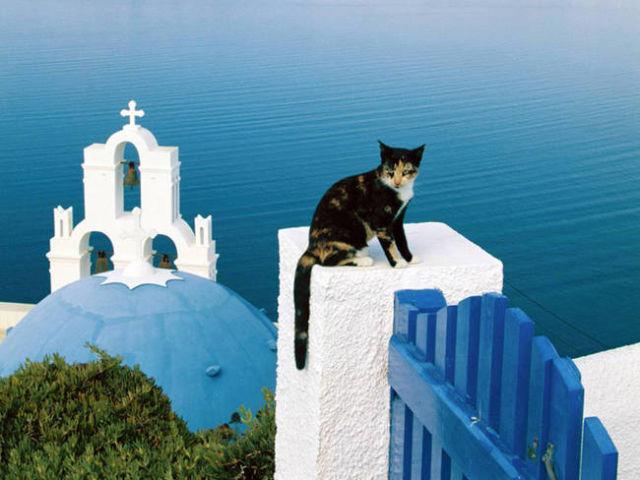 """Résultat de recherche d'images pour """"les chats en grece"""""""